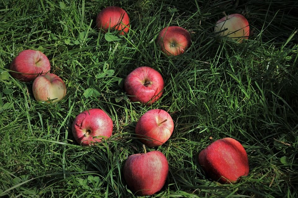 red-apples-4473937_960_720